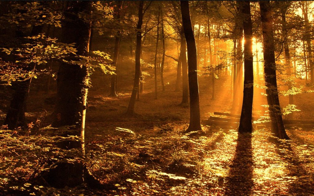 Bosque con precioso atardecer