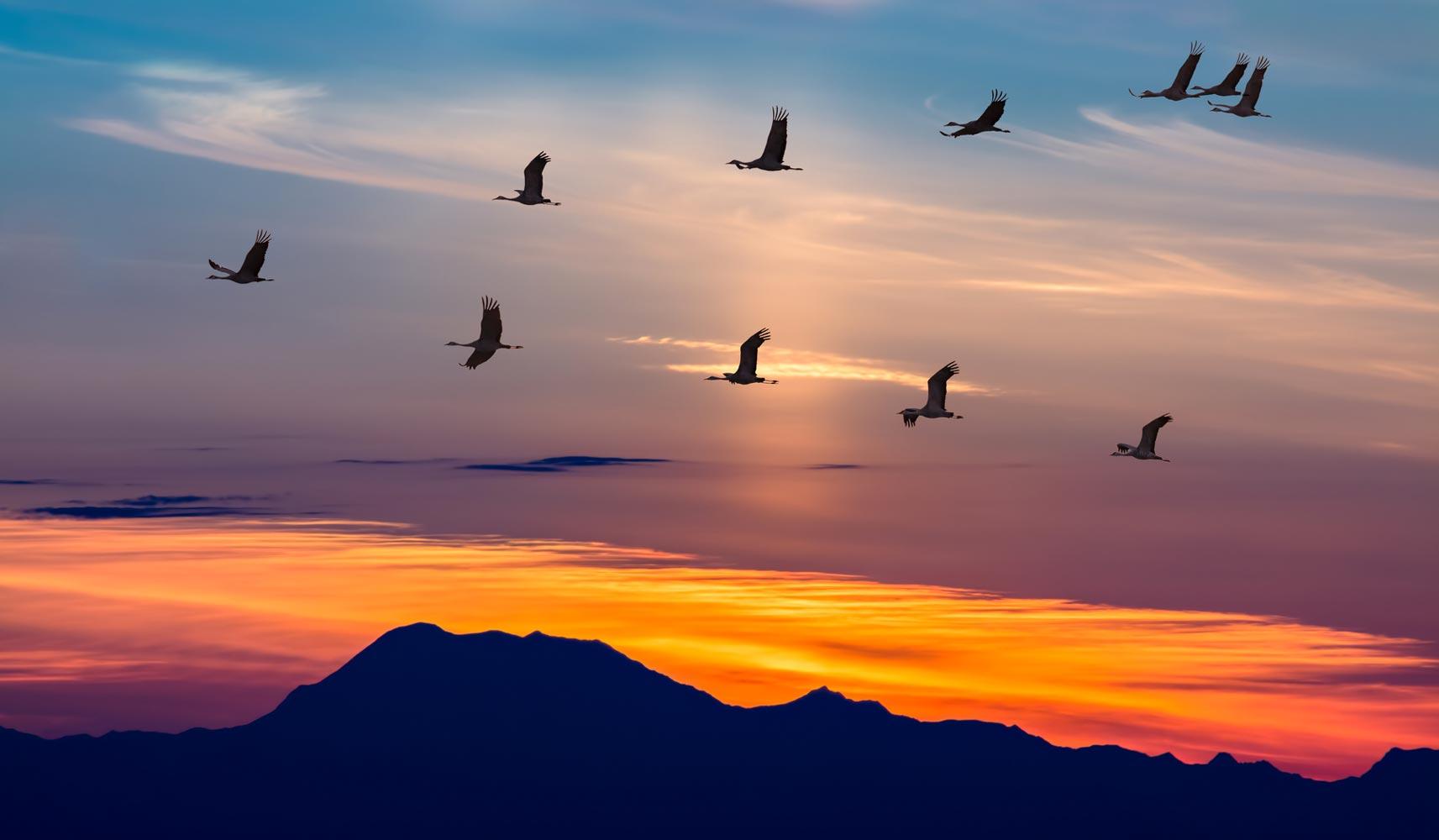 Αποτέλεσμα εικόνας για Αποδημία των πουλιών
