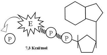 ATP = ADP + Pi + Energía (desfosforilación)